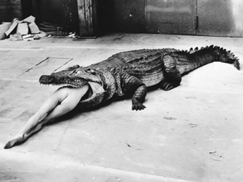 Helmut Newton. Crocodile