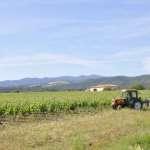 Enoturismo en Languedoc: Le Minervois