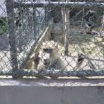 Azores: Exijo el Cierre del Zoo de Povoaçao