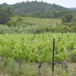 Enoturismo en el Sur de Francia: Montagnac, Aigne y Florensac