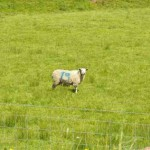 Irlanda del Norte: TURISMO EN EL CONDADO DE FERMANAGH