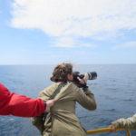 Navego con ballenas y delfines en Azores