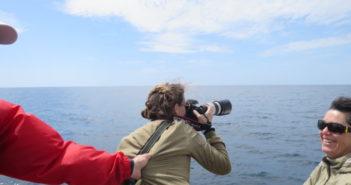 WOMANWORD en Azores. Ballenas en Terceira