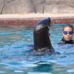 WILD WOMANWORD: Baño entre leones marinos