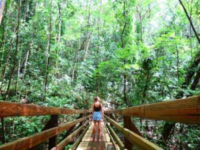 Puerto Rico: Vlog En las Montañas de Café