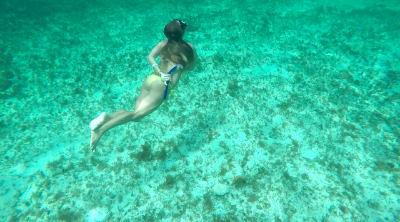 Akumal. Tortugas. Riviera Maya. Quintana Roo. México by WOMANWORD