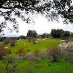 Sierra Norte de Madrid: Turismo sin salir de mi comunidad