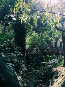 Taman Negara WOMANWORD