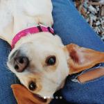 El negocio de los perros adoptados